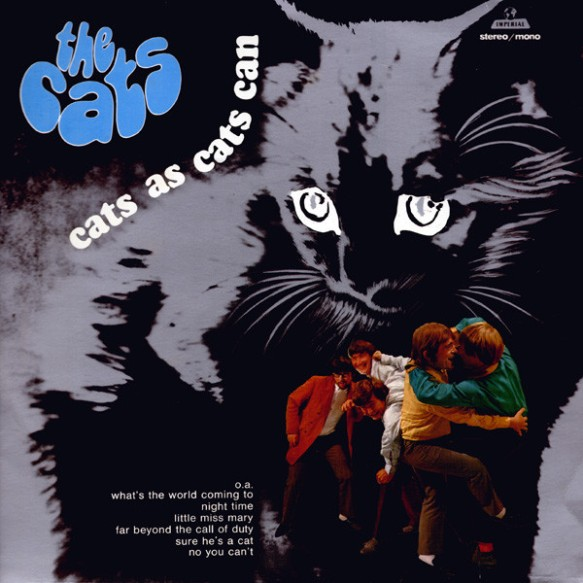 cats-109