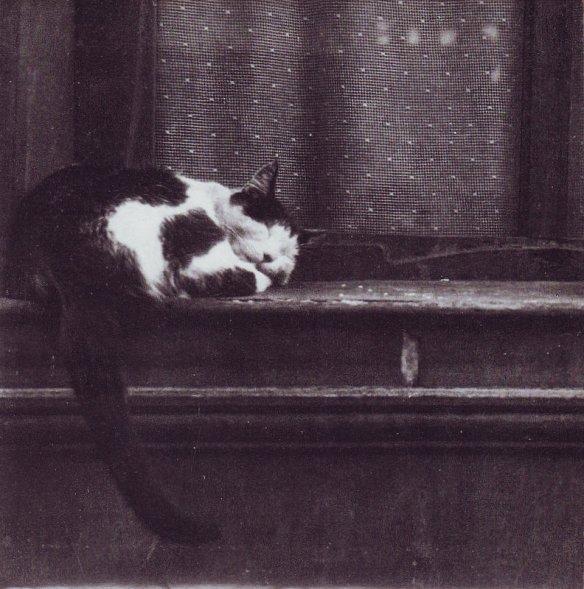 cats-72-tindersticks