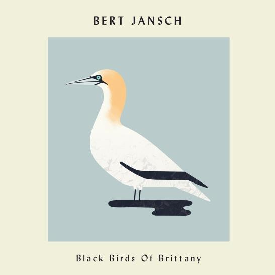 bird38