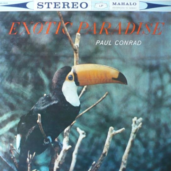 bird51