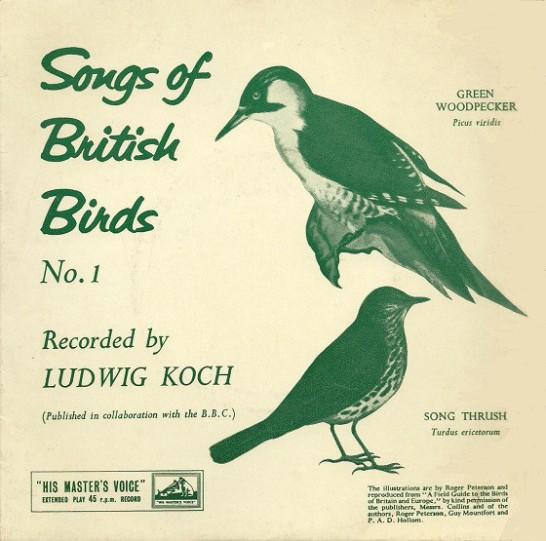 bird55