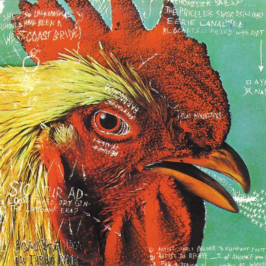 bird64