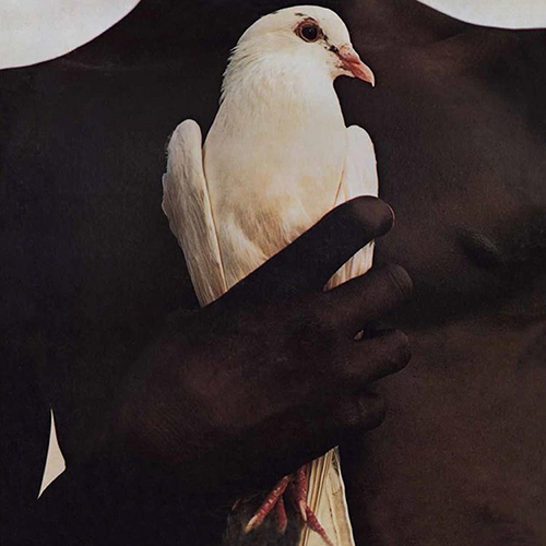bird72
