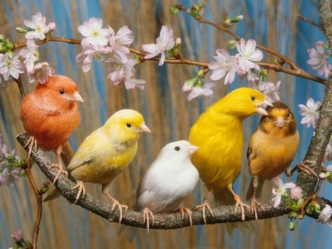 birds-photo-1