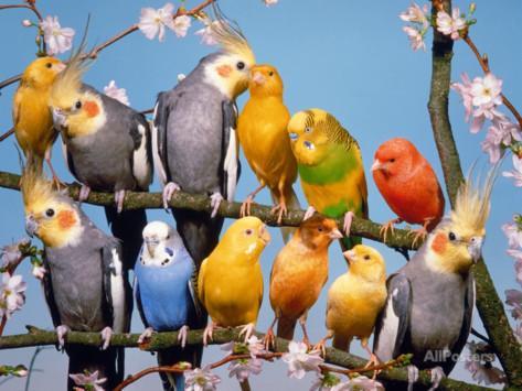 birds-photo-2