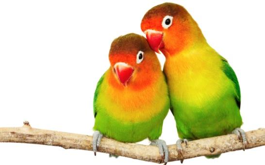 birds-photo-3