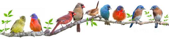 birds-photo-4