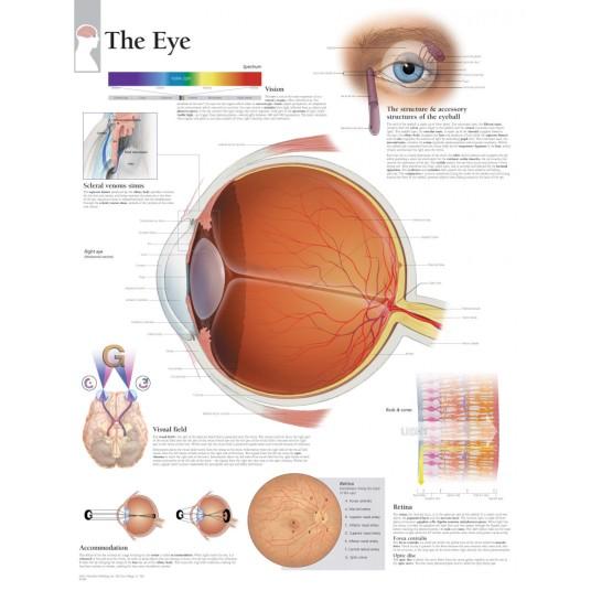eye-pic-3