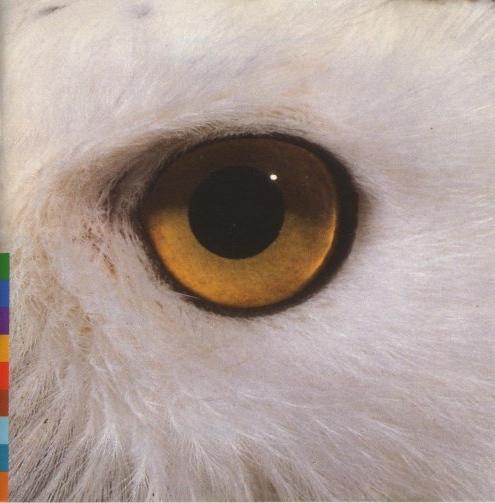 mari-boine-2001-gula-gula-front