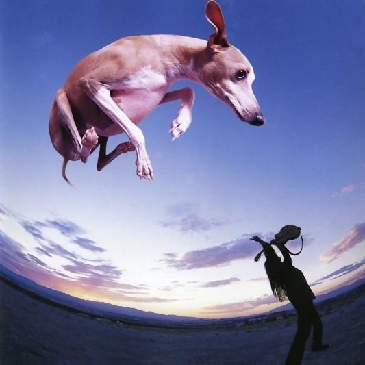 flying-dog-545d36a3ac6f5