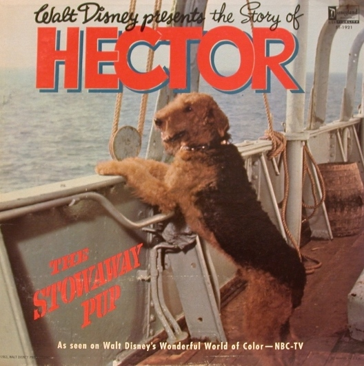 hector_the_stowaway_pup