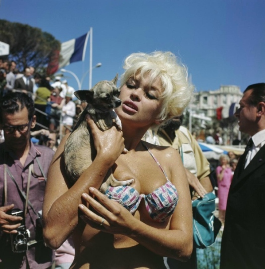 cannes-actress-movie-star-jayne-mansfield-dog-during-the-film-festival-photo-kees-sherer