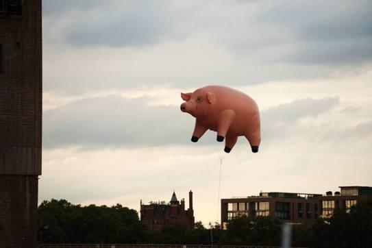 animals-pink-floyd