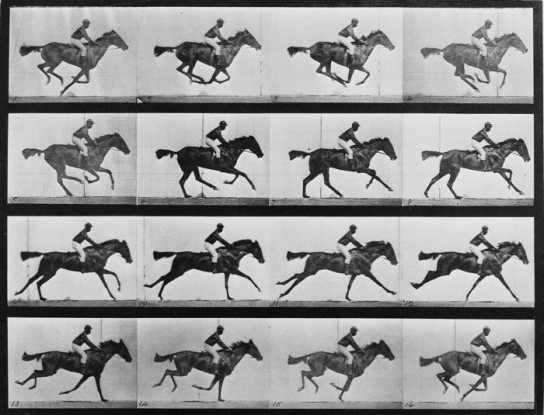 Eadward-Muybridge-Horse-in-Motion